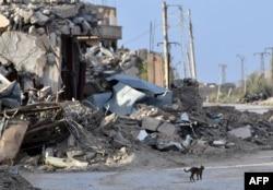 Mačka prolazi pored uništene kuće u selu Sousa, u blizini Baguza, u istočnoj sirijskoj pokrajini Deir Ezor, 21. marta 2019.