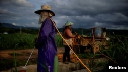 Yan Wenliu, 36, and his wife spray pesticides at a sugar cane field at a village of Menghai county in Xishuangbanna Dai Autonomous Prefecture, Yunnan Province, China, July 12, 2019. (REUTERS/Aly Song)