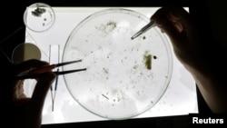 Para peneliti mengumpulkan sejumlah sampel untuk menganalisis mikroplastik sekaligus mengukur dampaknya terhadap kehidupan biota laut. (Foto: ilustrasi).