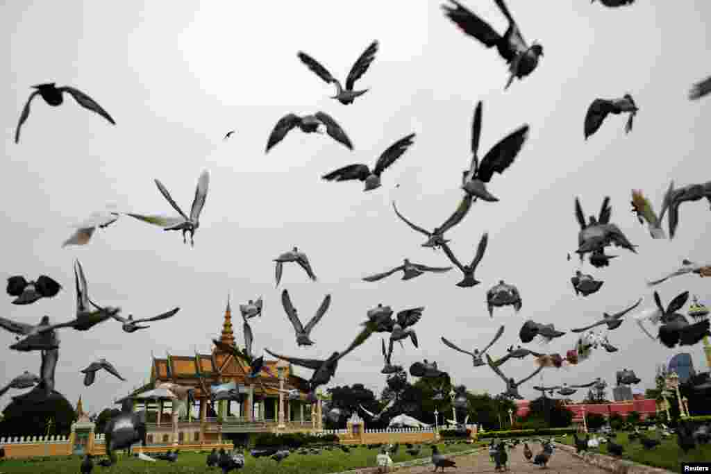 Pigeons fly outside the Royal Palace in Phnom Penh, Cambodia.