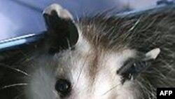 10 животных в зоопарке Ялты – жертвы отравления