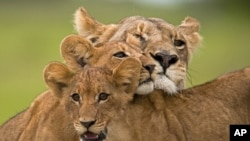 """Scene from """"The Last Lions"""""""