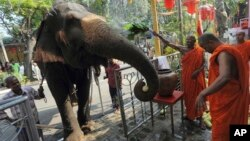 FILE - Sri Lankan Buddhist monks bless a domesticated elephant brought in for a Buddhist temple festival in Colombo, Sri Lanka, Feb. 24, 2013. For Buddhists, who make up 70 percent of the island's 20 million population, elephants are believed to have been
