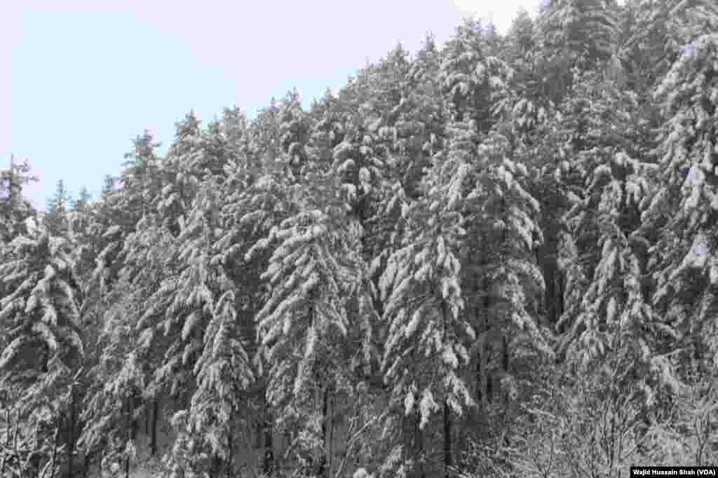 برفباری کے دوران ہر چیز نے سفید چادر اوڑھ لی ہے۔