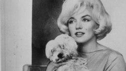 زندگی و دیدگاه های سگی به نام ماف و دوستش مرلین مونرو