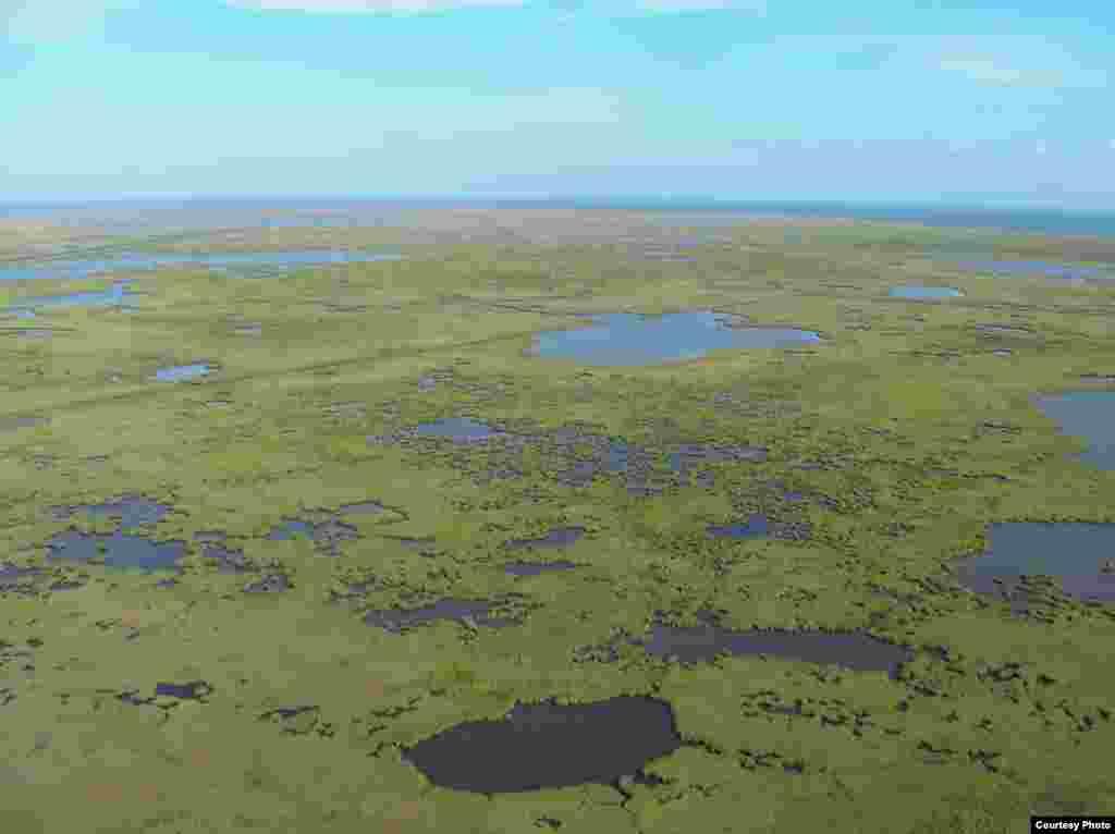 Močvare u delti Mississippija, čije se područje smanjuje, važno su stanište divljih vrsta, a služe i kao zaštita od oluja i uragana. (K. L. McKee/USGS)