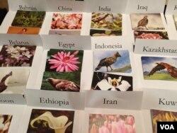 艾未未设计的、给20多个国家异议人士的明信片(美国之音 方冰拍摄)