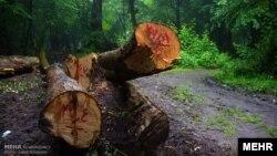 نمونهای از تخریب گسترده جنگلها در ایران - آرشیو