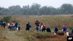 Dòng người tị nạn len lỏi qua các cánh đồng sau khi vượt biên giới Serbia - Hungary ngày 11/9/2015.