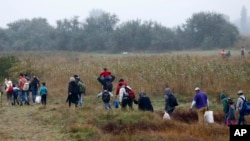 A group of migrants make their way through fields and meadows in the early morning after crossing the Serbian-Hungarian border near Roszke, southern Hungary, Sept. 11, 2015.