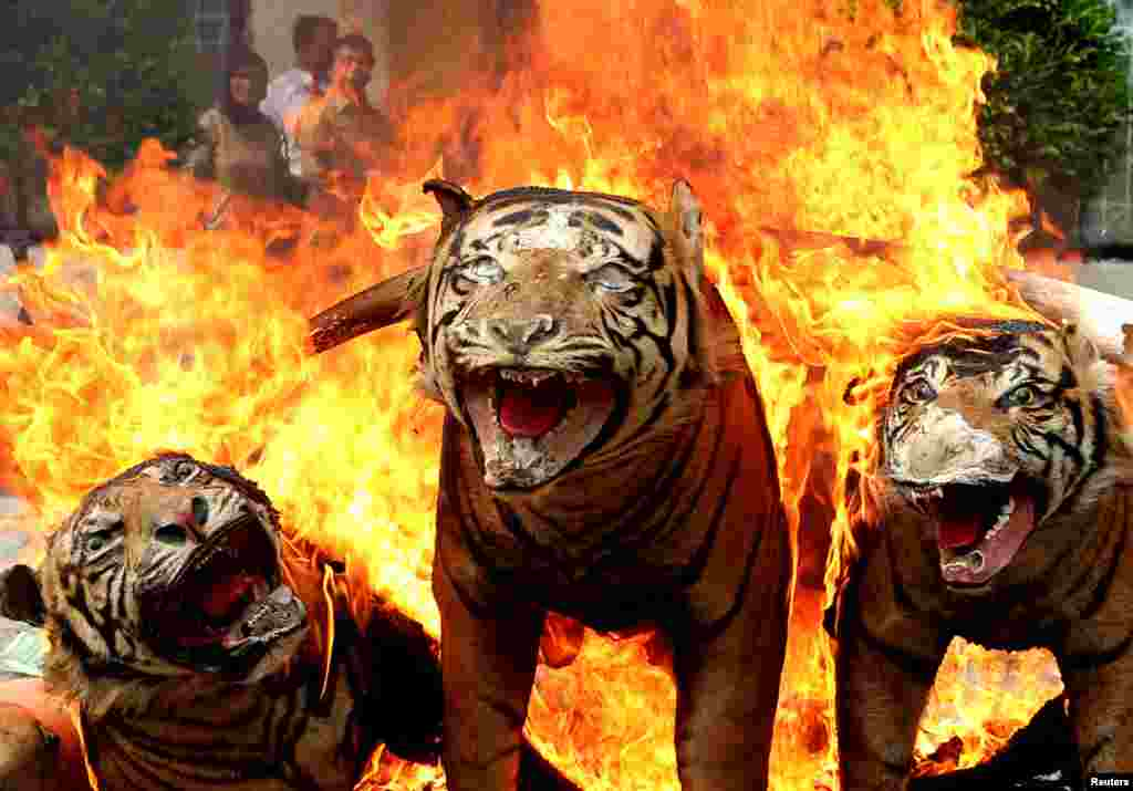 Rare and protected wildlife products that have been confiscated, such as stuffed Sumatran tiger skins, are burned during a ceremony by government forestry and wildlife officials in Banda Aceh, Aceh province, Indonesia, in this photo taken by Antara Foto.