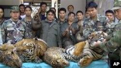 ประเทศไทยใช้เทคโนโลยีและเจ้าหน้าที่สำรวจป่าของกรมป่าไม้ในการคุ้มครองเสือป่า
