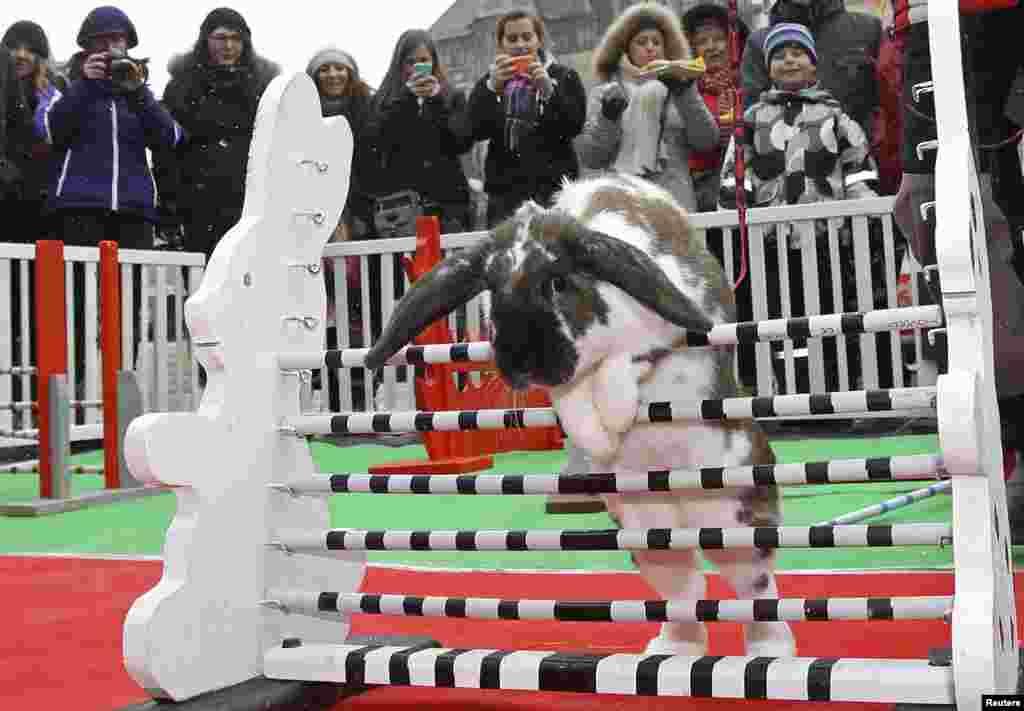 在捷克共和国布拉格的老城广场的传统复活节市场,人们观看兔子跳跃障碍。