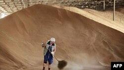 Nga tin tưởng năm nay sản lượng lúa mì sẽ dư ra nhiều triệu tấn