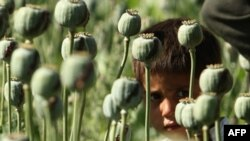 США ударят долларом по наркотрафику