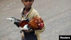 Un enfant tient un poulet dans ses bras à Lalibela le 4 mai 2013.