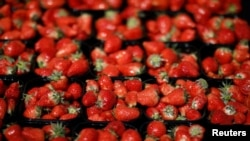 The Australian government is offering a reward following reports of people finding needles and pins in their strawberries.
