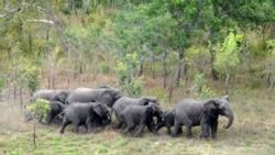 Elefantes destroem campos agrícolas no Bengo - 1:28