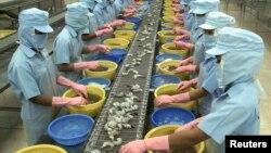 Công nhân Việt Nam lột vỏ tôm tại công ty thủy sản Kim Anh ở Sóc Trăng.