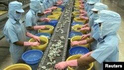 Công nhân làm việc tại một nhà máy chuyên xuất khẩu tôm từ Việt Nam sang Hoa Kỳ.