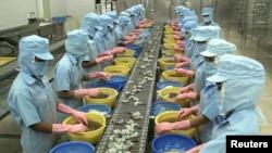 Công nhân làm việc tại một công ty chế biến và xuất khẩu tôm ở Sóc Trăng.