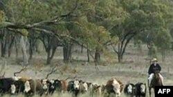 Quốc tế hợp lực nghiên cứu về biến đổi khí hậu nông nghiệp