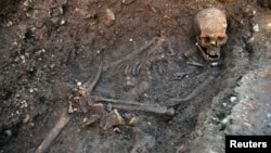 The skeleton of Richard III is seen in a trench at the Grey Friars excavation site in Leicester, central England, London, in this picture provided by the University of Leicester and received in London on February 4, 2013.