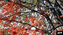 65 năm một mùa thu…