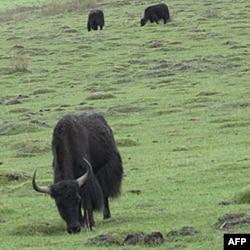 位于四川省阿坝藏族自治洲若尔盖县境内的四川若尔盖湿地自然保护区