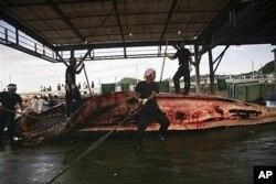 日本捕鯨者宰殺鯨魚現場