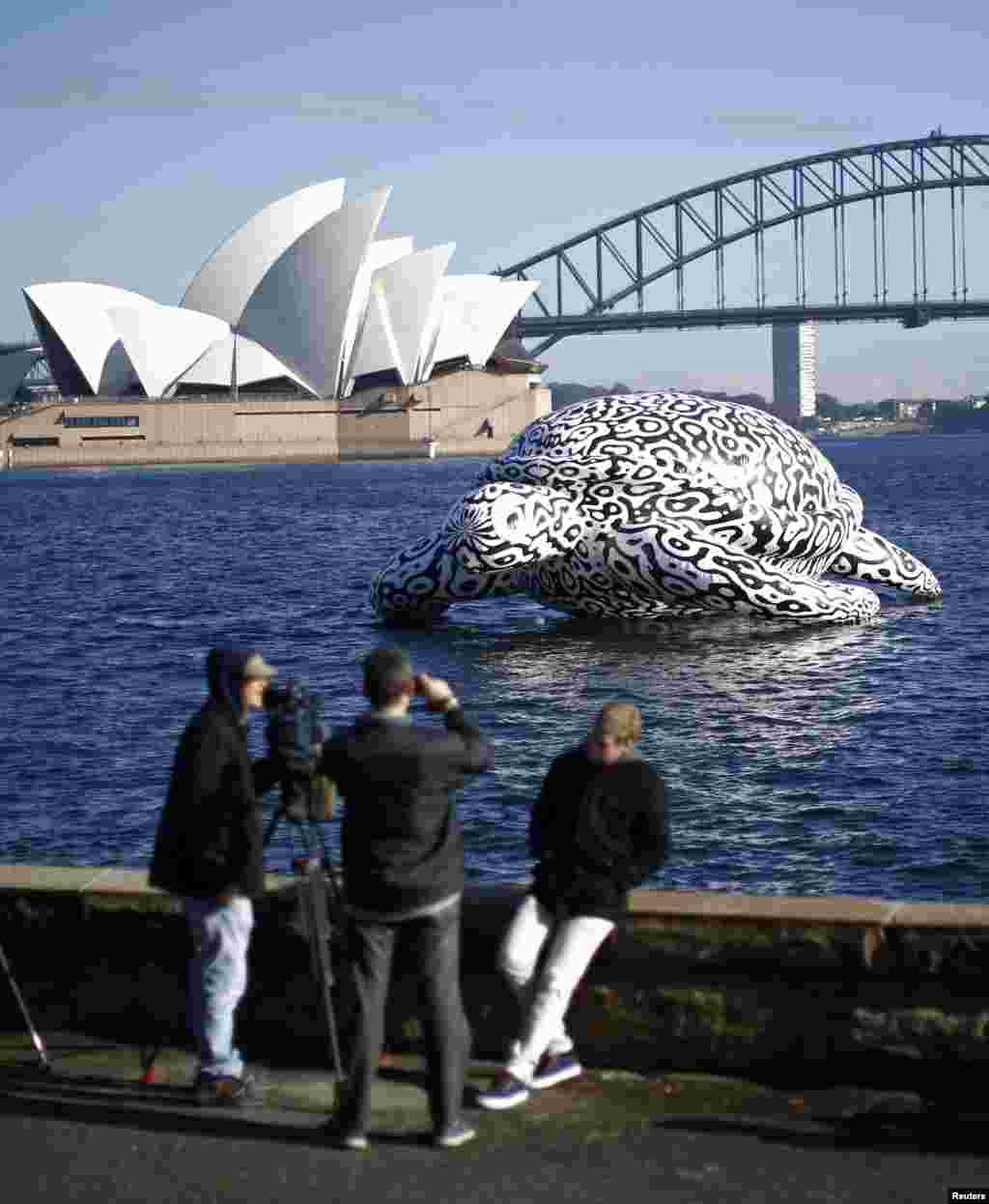 People take pictures of a sculpture named 'Alpha Turtle' as it floats in front of the Sydney Opera House and Harbor Bridge. The sea turtle featuring a black and white rendering of coral reef structures was floated past the iconic Sydney landmarks on Friday to promote an undersea art exhibition at the Sea Life Sydney Aquarium.