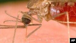 Peritos duvidam de estatíscas sobre febre amarela em Angola - 2:42