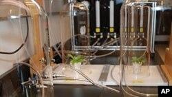 ภาษาทางเคมีของพืชช่วยชาวนาแก้ปัญหาแมลงศัตรูพืชได้ตรงจุด