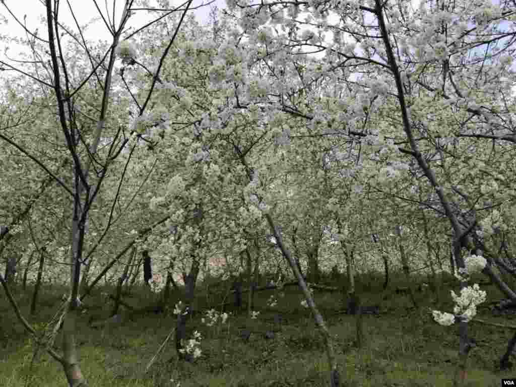 مشهد- روستای ازغد عکس: مجید (ارسالی شما)