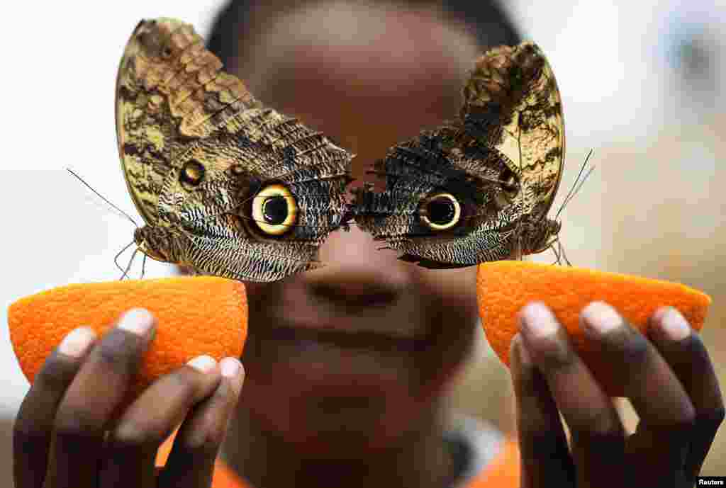 Bjorn, aged 5, smiles with Owl butterflies during an event to launch the Sensational Butterflies exhibition at the Natural History Museum in London, Britain.