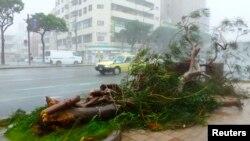 Cây cối bị bão quật đổ tại Okinawa, ngày 8/7/2014.