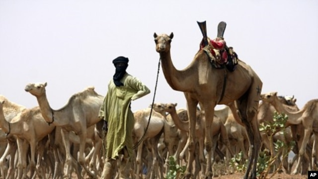 A nomad from the famed Tuareg nomad tribe of the Sahara Desert brings his herd for vaccination to a team of U.S. Special Forces in the Sahara Desert heading out aid near the town of Gao in northeastern Mali. (File Photo)