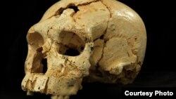 Hộp sọ thứ 17 từ hang Sima de los Huesos ở Sierra de Atapuerca, Tây Ban Nha. (Javier Trueba / Madrid Scientific Films)