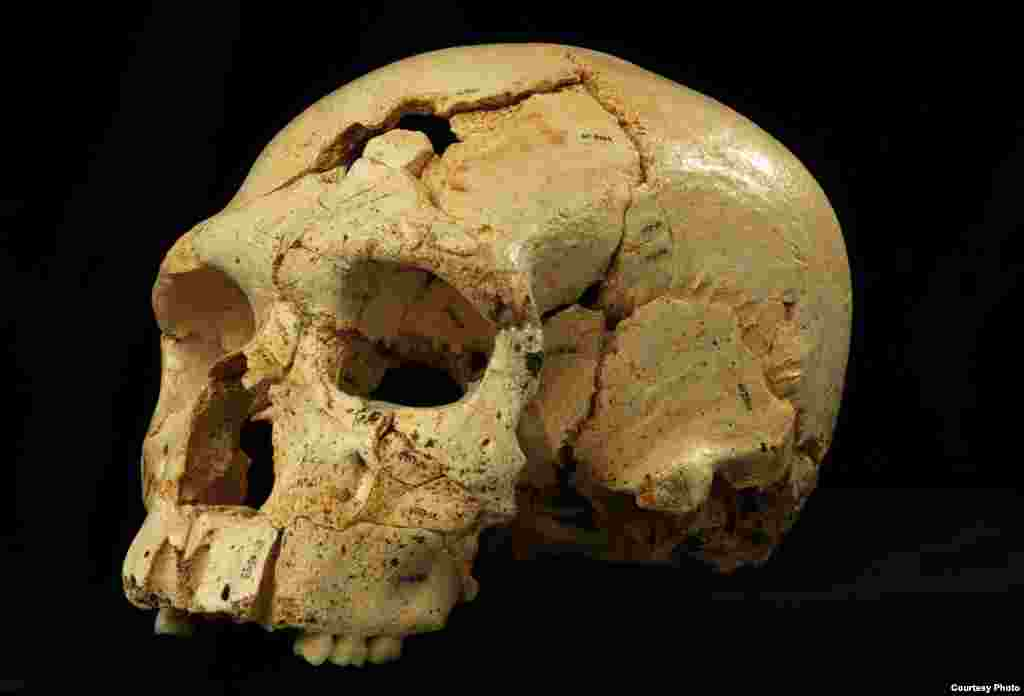 Skull 17 from the Sima de los Huesos site in Sierra de Atapuerca, Spain. (Javier Trueba / Madrid Scientific Films)