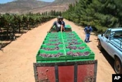 The past South African summer yielded a massive crop of grapes, which resulted in the making of great wines