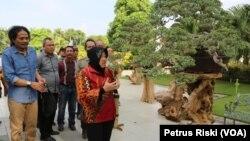 Wali Kota Surabaya Tri Rismaharini, saat melihat tanaman bonsai yang dipamerkan pada Festival Bonsai Nusantara (foto VOA/Petrus Riski)