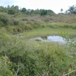 This mosquito larval habitat in Kilifi, Kenya, is also used for domestic purposes such as washing.