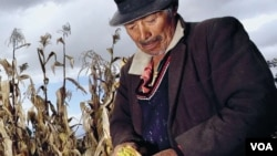 Global Hunger Index 2012 says hunger remains serious global problem. Credit: IFPRI