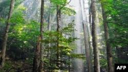 Việt Nam thành lập nhóm FLEGT để hỗ trợ việc quản lý rừng