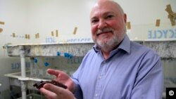პროფესორი გლანზმანი ზღვის ლოკოკინასთან ერთად. კრისტინ სნოუს ფოტო. კალიფორნიის უნივერსიტეტის ლოს-ანჯელესის ფილიალი (UCLA).
