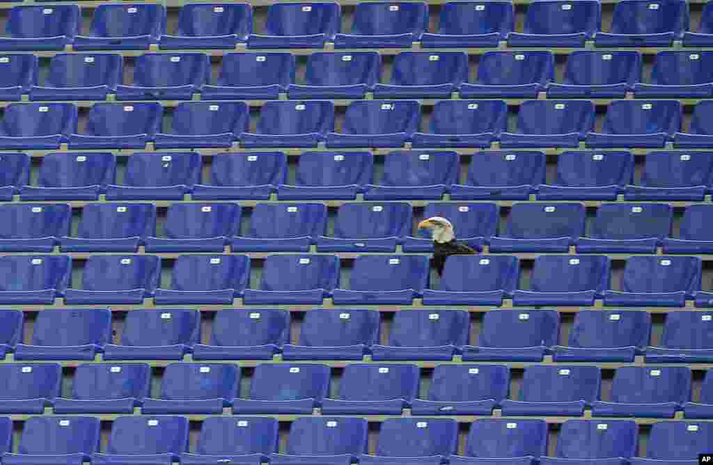 Lazio's mascot, the eagle Olympia, sits in the empty stands prior to the start of a Serie A soccer match between Lazio and Bologna in Rome's Olympic stadium, Italy.