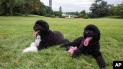 Bo y Sunny también tuvieron que cumplir algunas medidas de salud para poder disfrutar junto a la familia Obama en Hawai.