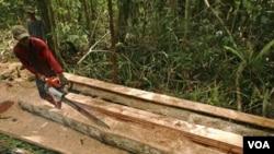 UNESCO memperingatkan penebangan hutan liar masih terus terjadi di hutan tropis Sumatera.
