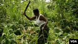 Se estima que la producción mundial de trigo es un 5% más baja de lo que habría sido sin el calentamiento global.