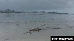 豪雨过后淡水河中大量上游漂浮物(美国之音记者申华 拍摄)
